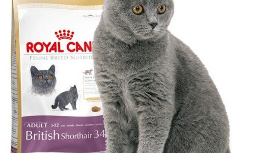 Mejor Pienso Royal Canin Gatos