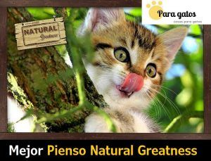 mejor pienso natural greatness gatos