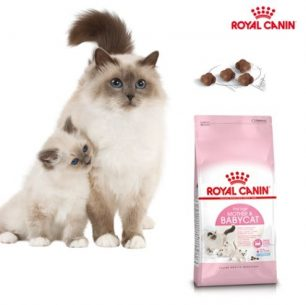 análisis pienso royal canin mother and babycat